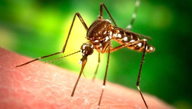 נגד יתושים, טיפול, עקיצות, טבעי, אקולוגי, רויטל ורד -טבע, עיסוי בנימינה, הוליסטי