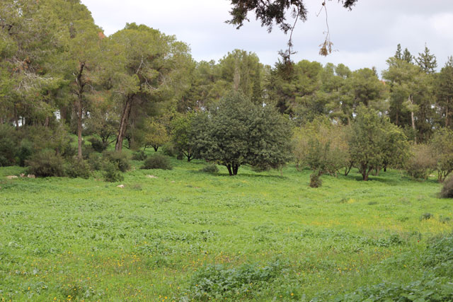 טיול רומנטי ביער מענית
