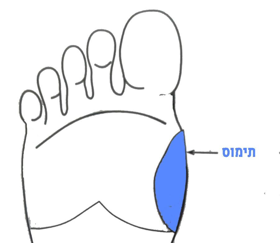 עיסוי אזור בלוטת התימוס בכף הרגל עשוי להביא להקלה במצבים של נזלת ושיעול